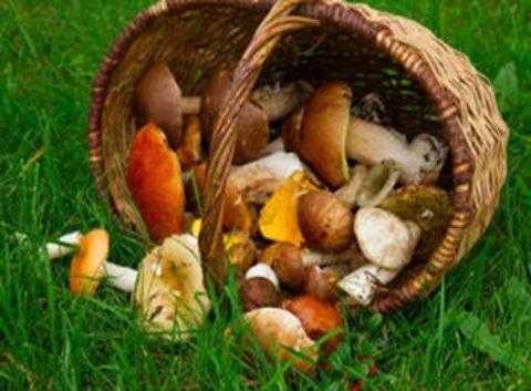 Journée mycologique. Forêt domaniale de Boulogne à Chambord